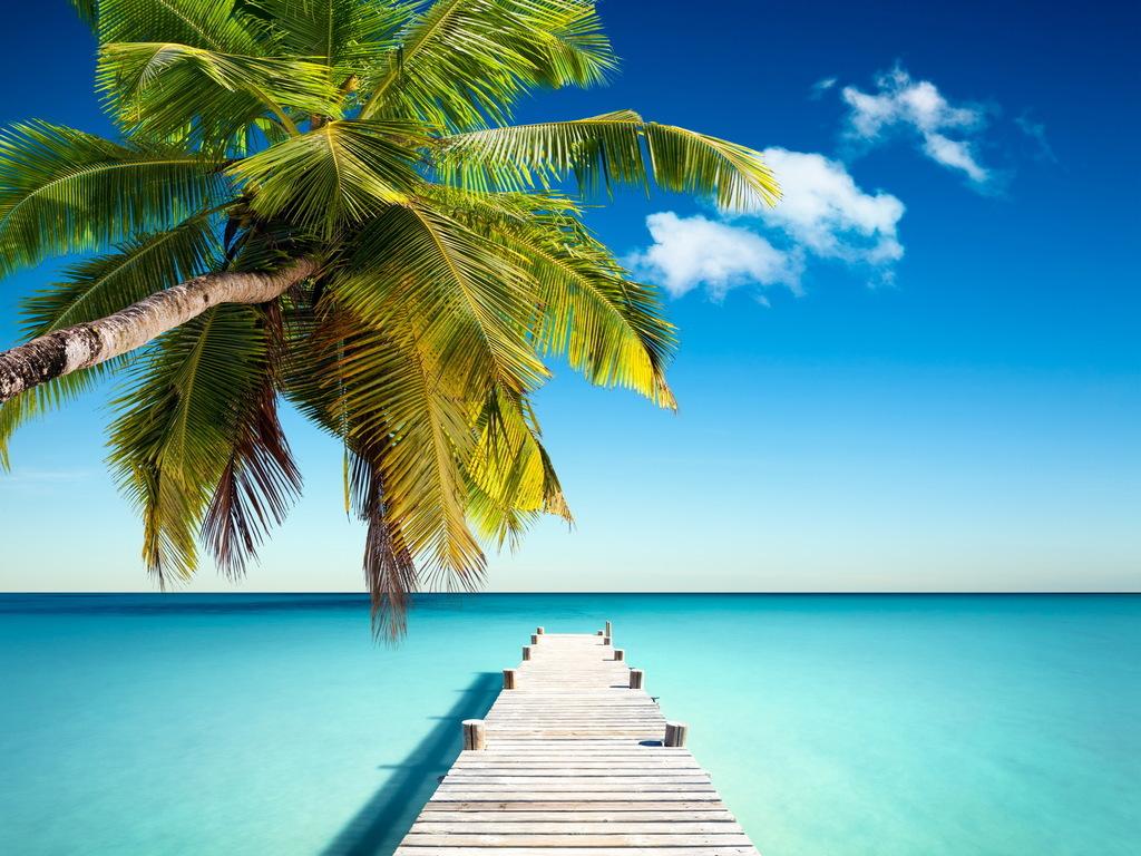 树码头海岸海洋5K高清风景图片设计素材 模板下载 5.88MB 其他大全