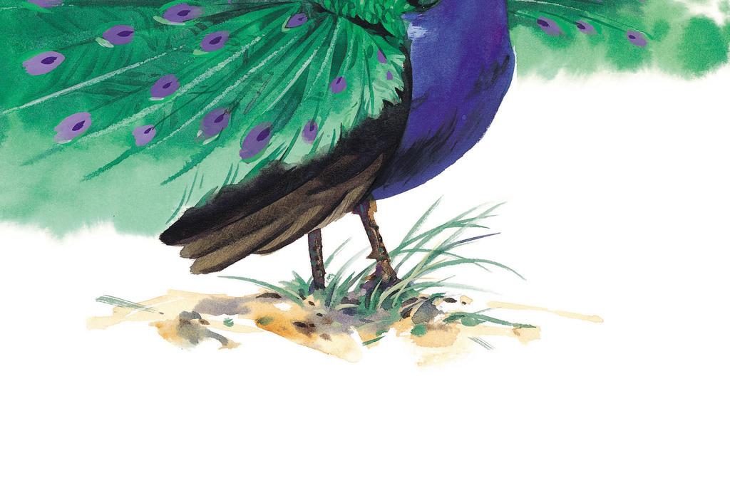 高清鸟彩绘图片素材36