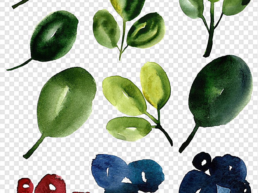 水彩树叶葡萄水彩葡萄手绘葡萄手绘果实