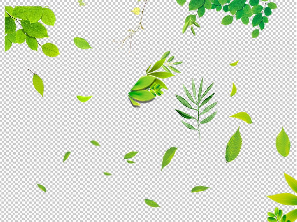 树叶矢量图png
