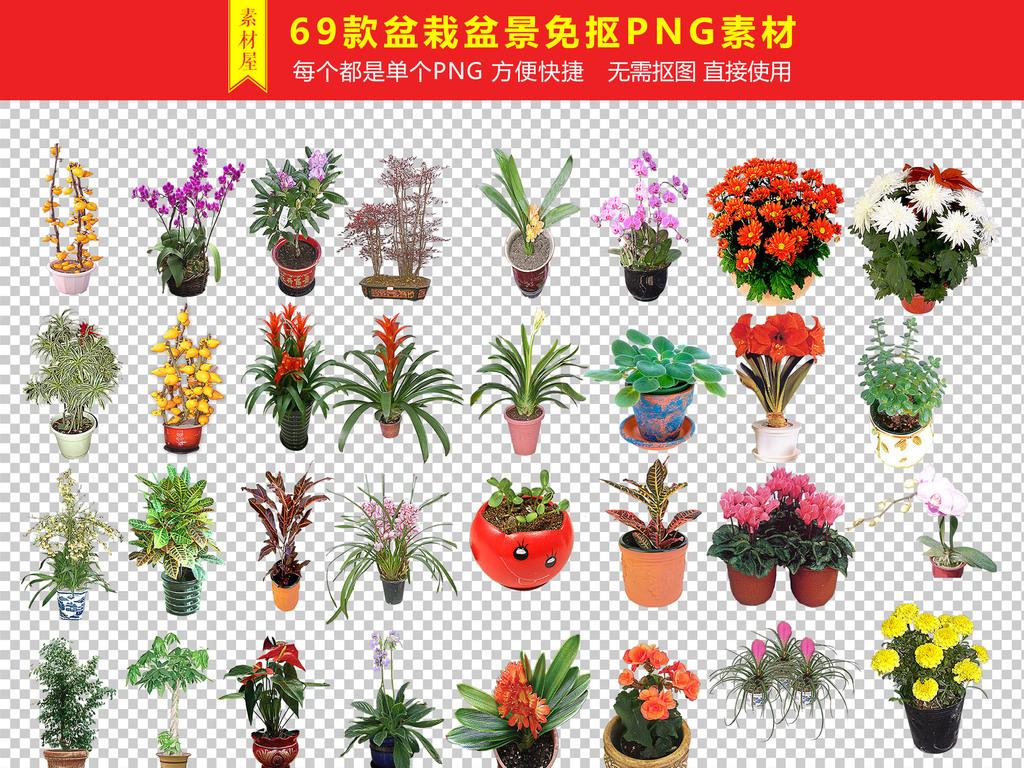 盆栽植物免扣png海报素材