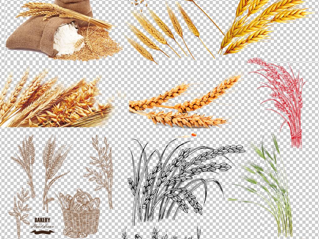 60款麦穗稻谷高粱png素材