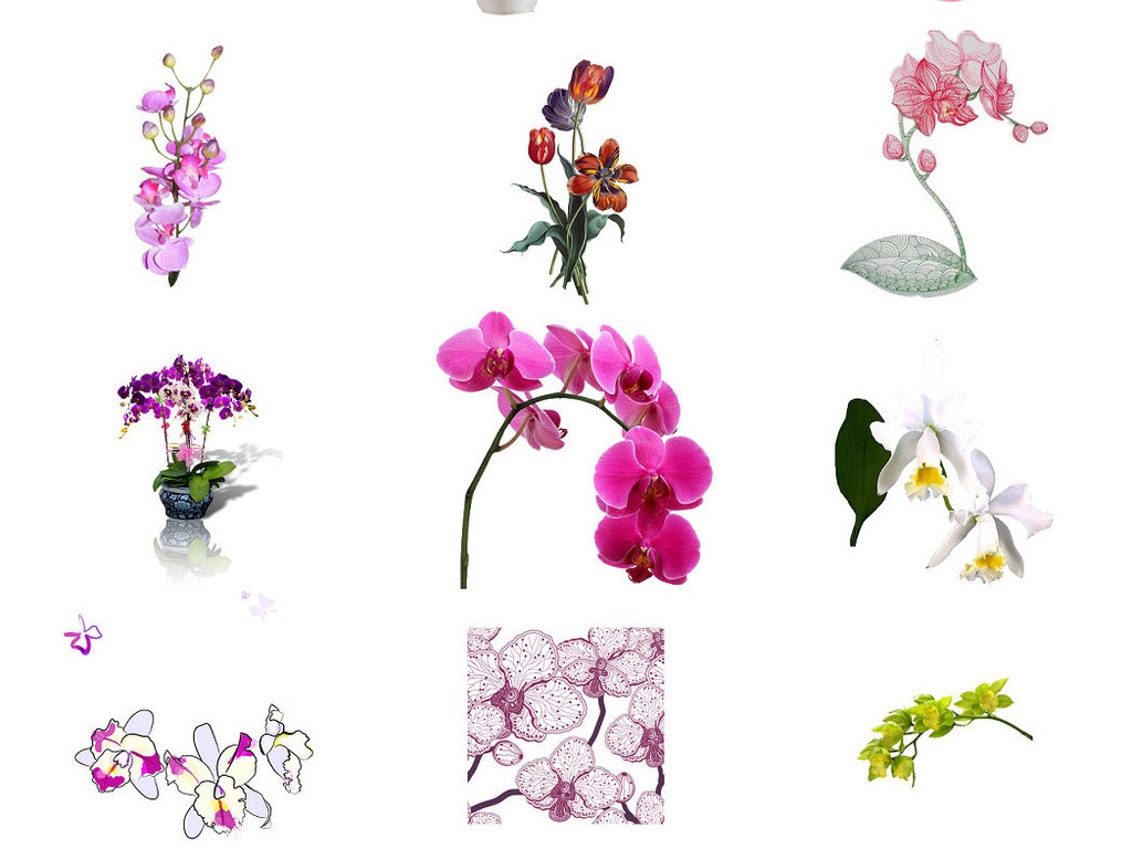 观花植物蝴蝶兰海报设计素材3