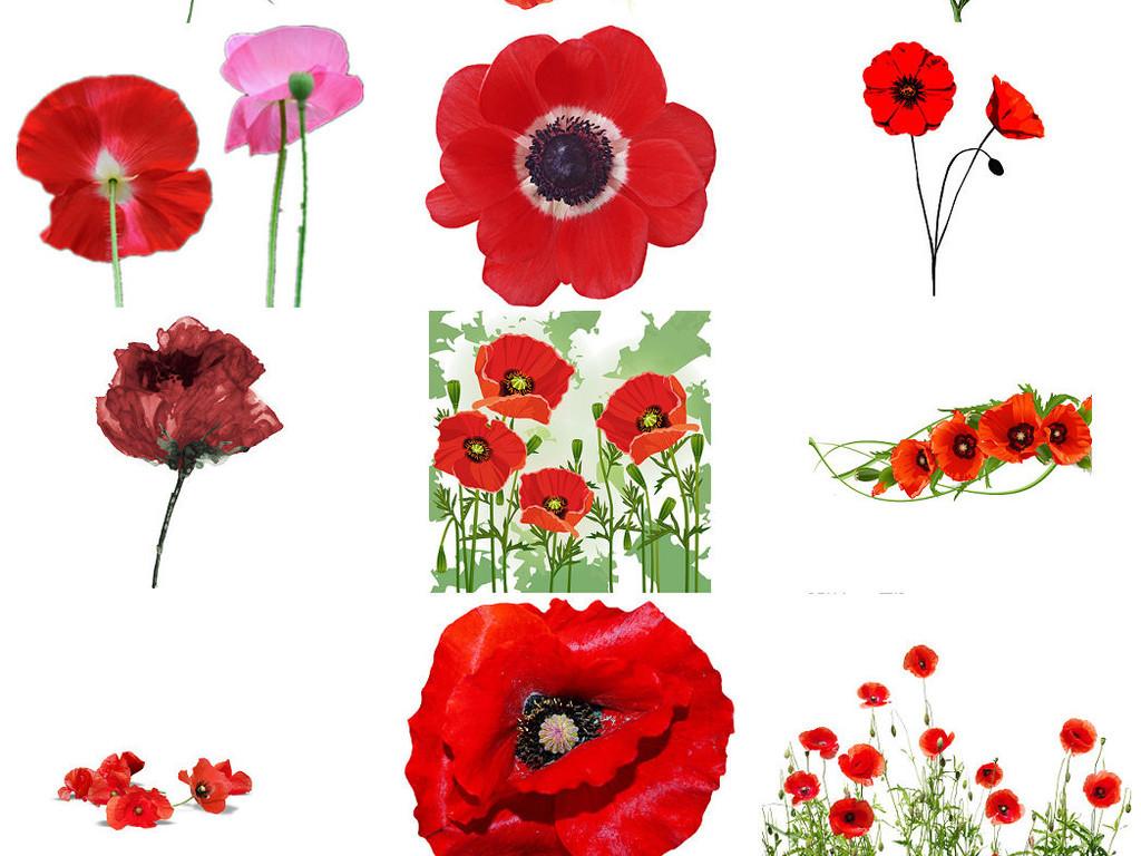 花朵罂粟花海报设计素材