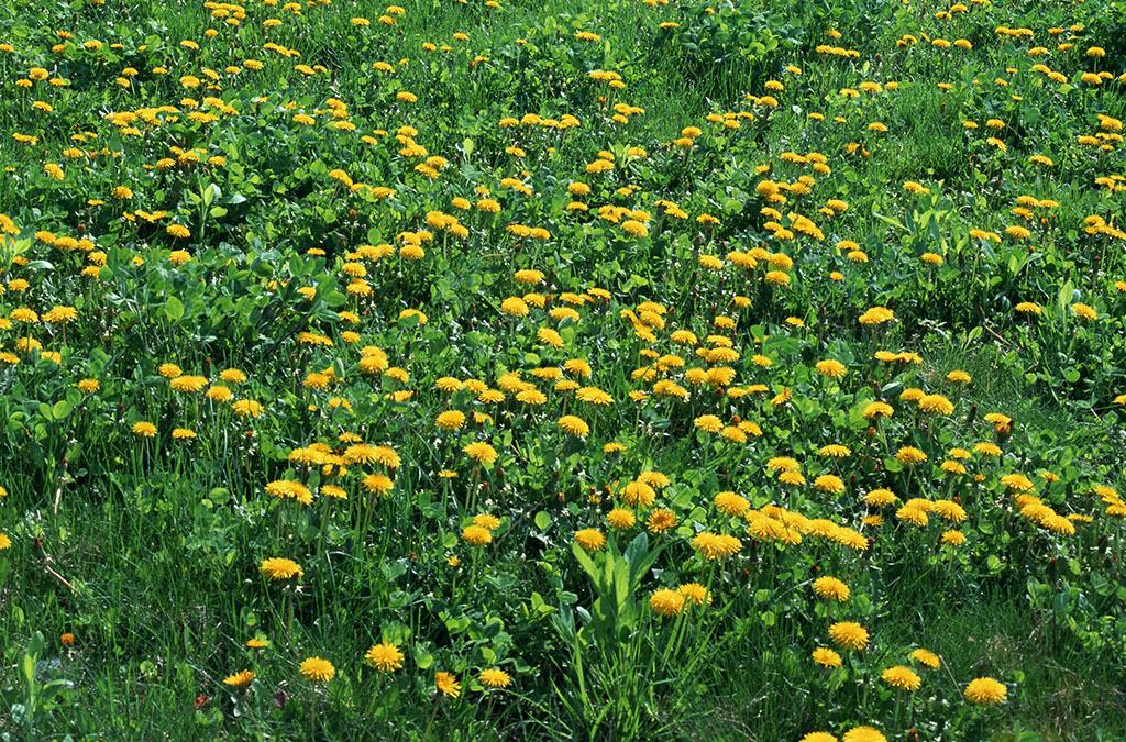 满地鲜花大自然花朵高清大图017