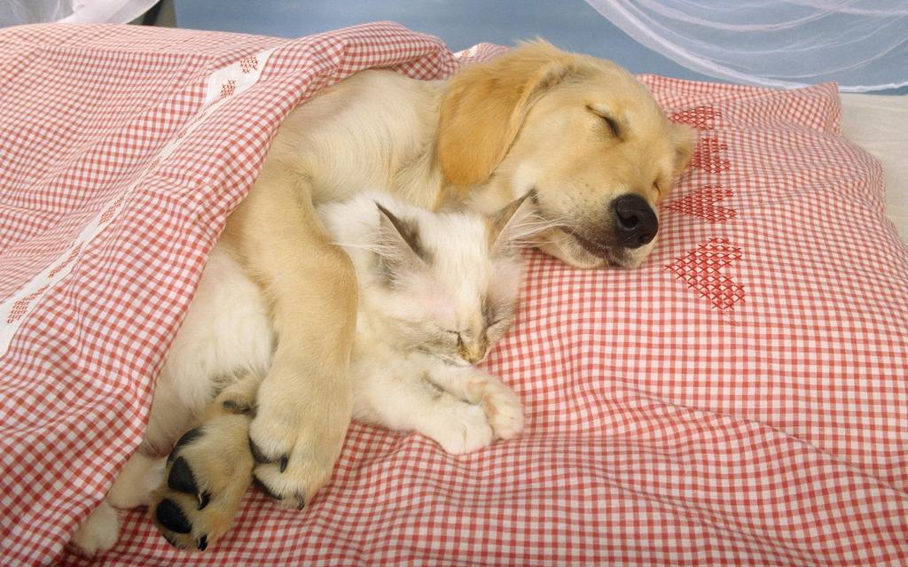 壁纸家庭宠物家居一角养宠物小狗图片名犬收养动物猫狗宠物狗可爱宝贝