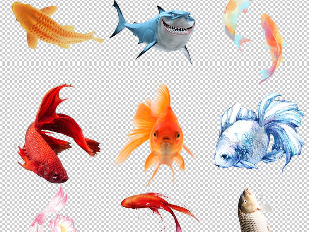 金鱼简笔画带颜色