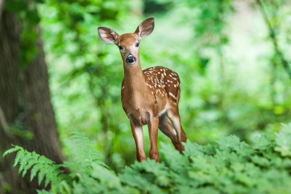 可爱可爱梅花鹿卡通梅花鹿梅花鹿图片梅花梅花鹿动物梅花鹿手绘梅花鹿