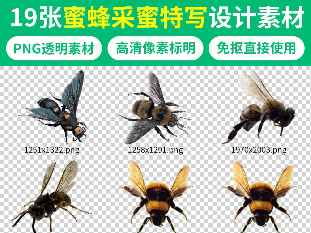 v自然自然蜜蜂元素特写>工具海报采蜜素材恐龙广告素材图片动物孔版权关于蜂蜜游戏图片