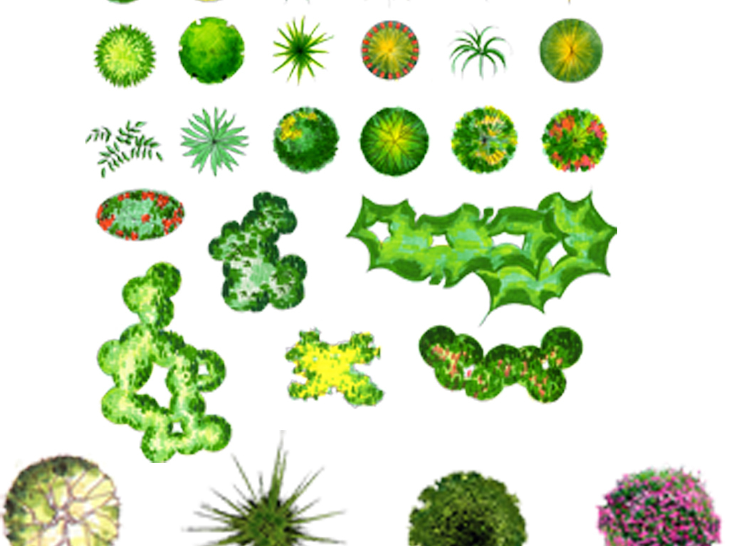 植物平面彩图psd