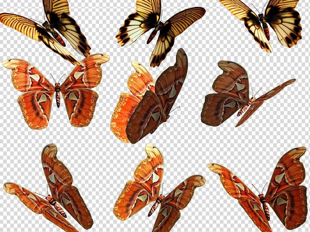 蜻蜓蝴蝶昆虫标本水墨卡通动物png大全