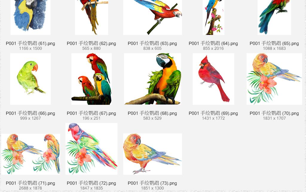 水彩手绘鹦鹉装饰设计素材