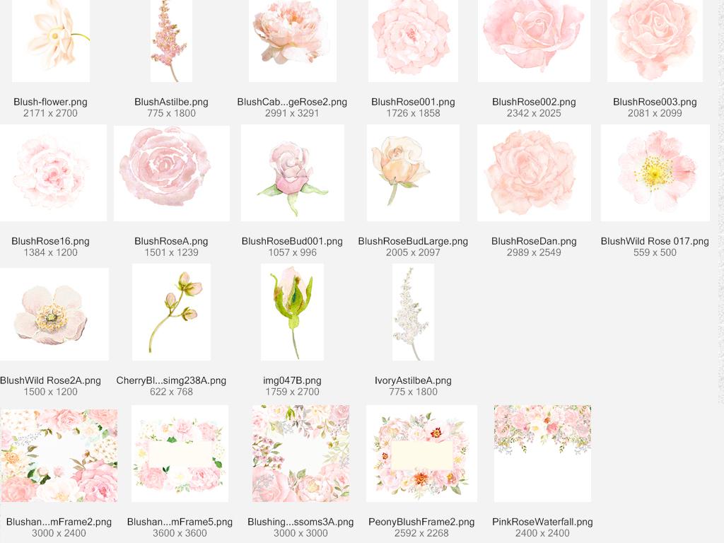 花蕊手绘水彩文艺小清新水彩树叶滕条玫瑰花叶子元素淡雅花朵花束