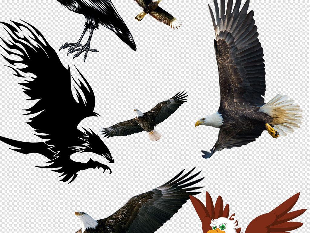 标志素描老鹰卡通动物动物元素老鹰图片老鹰的图片老鹰背景卡通老鹰