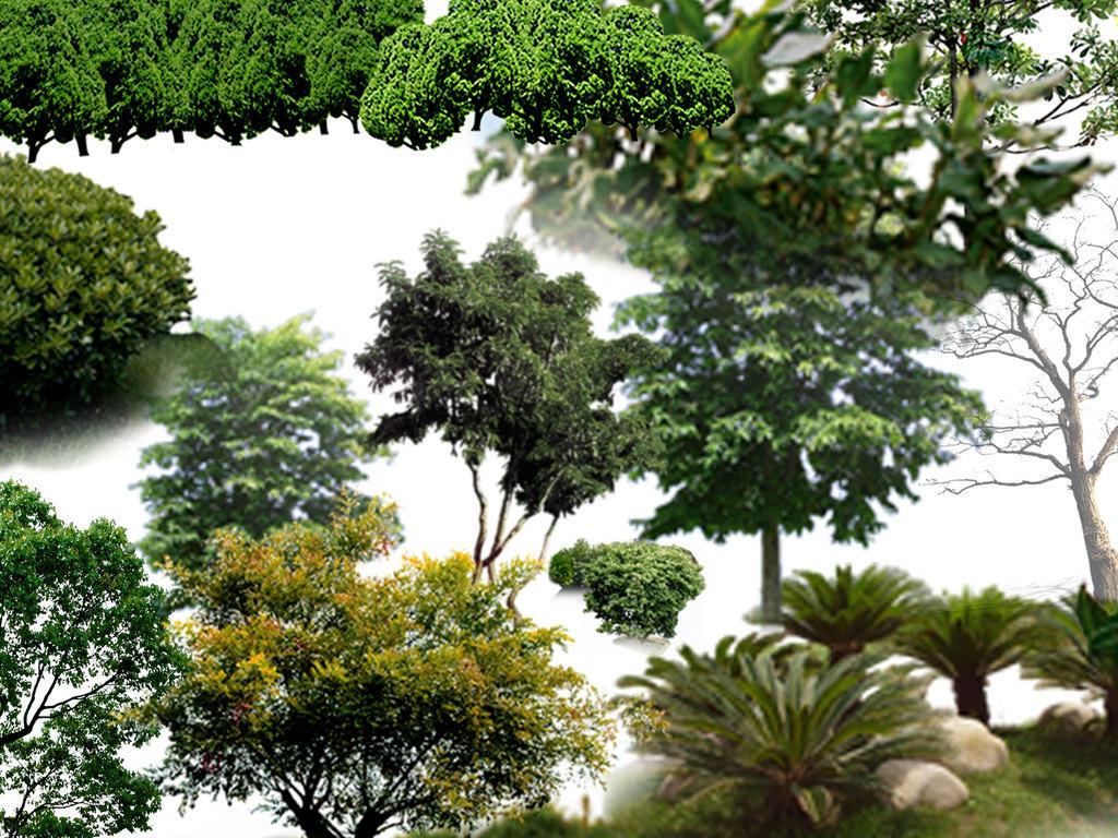 素材花草树木树木剪影花草树木图片树木大树花草树木卡通图片手绘树木