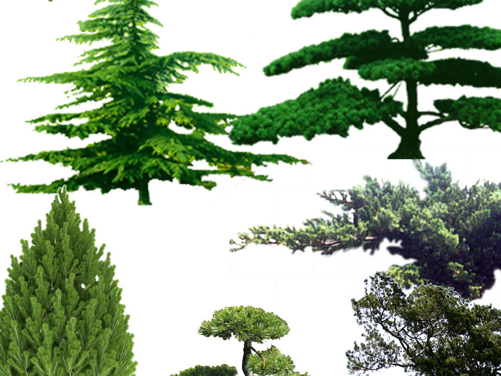 树木树木剪影花草树木图片树木大树花草树木卡通图片手绘树木森林树木