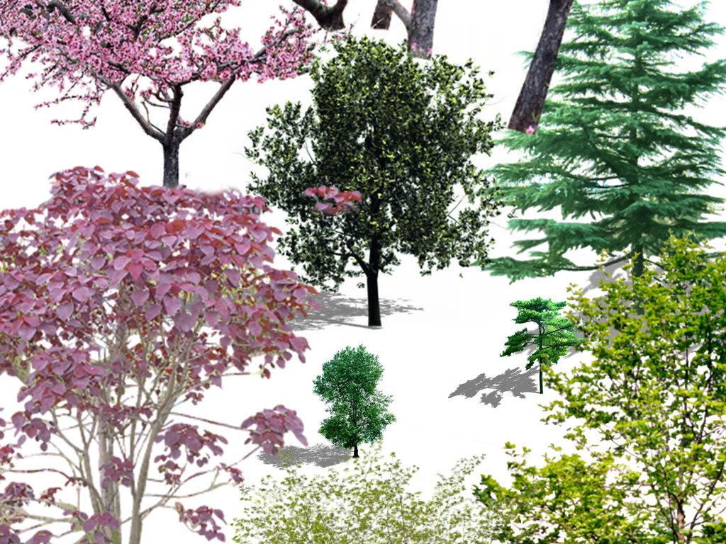植物园林景观树木配景设计元素