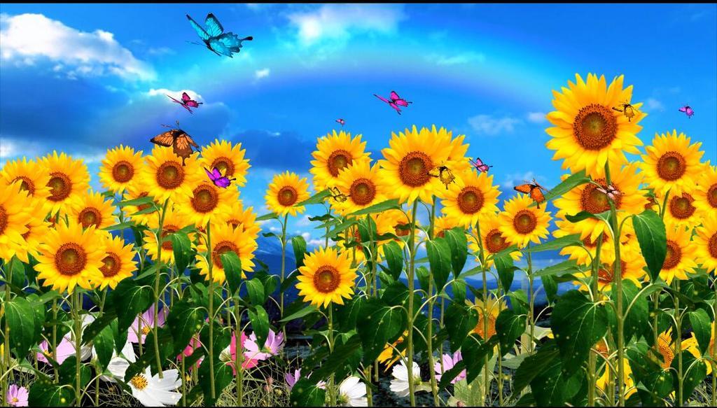 蓝天白云向日葵蝴蝶飞