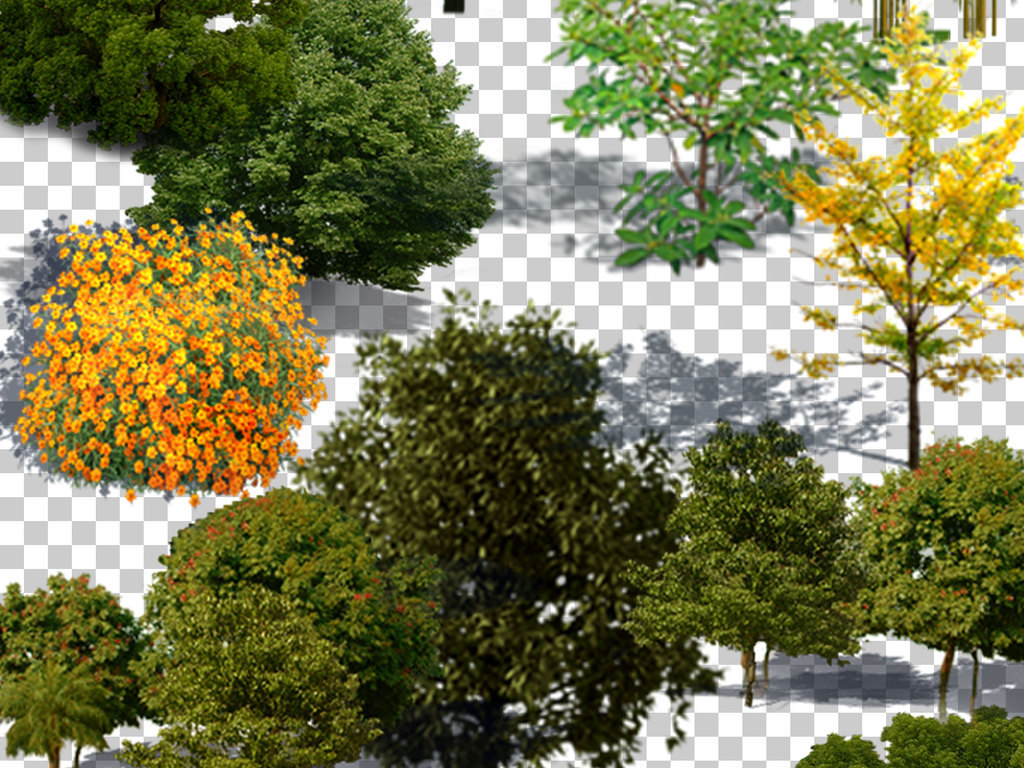 植物山坡草地植被园林景观树木配景设计元素