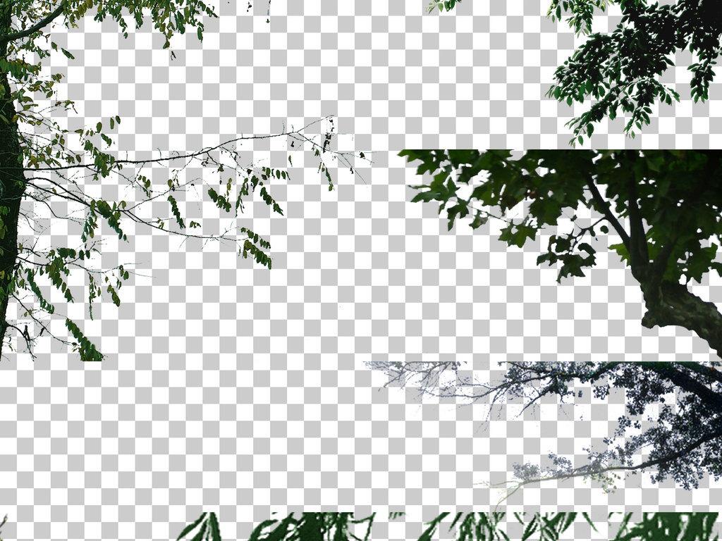 挂角树植物园林景观树木配景设计元素
