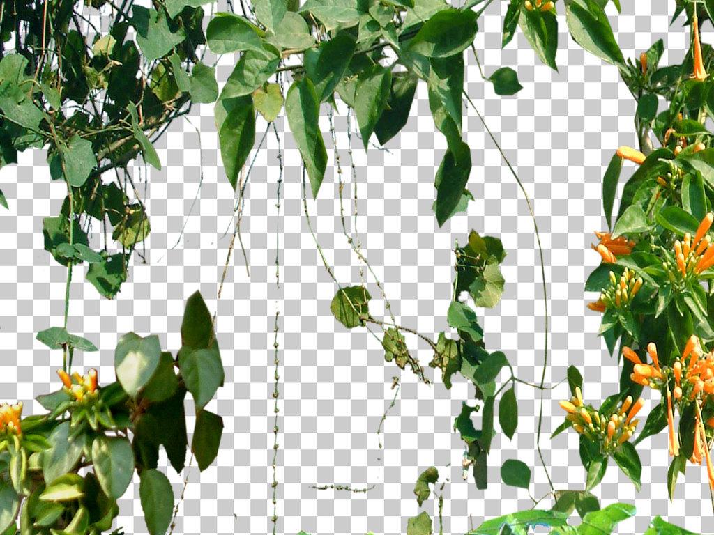 藤蔓植物绿化山坡草地植被园林景观树木配景设计元素