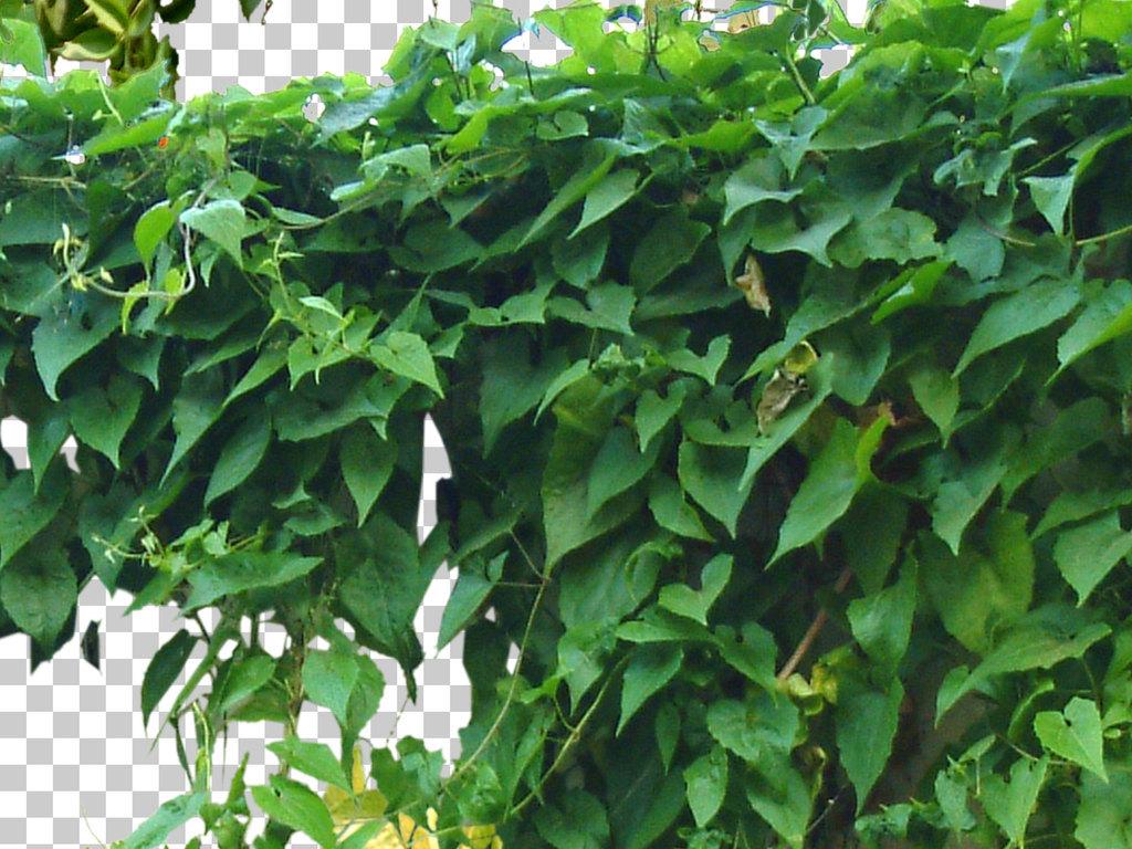 公园广场城市规划毕业作业绿色背景绿色环保植物设计草地元素树木藤蔓
