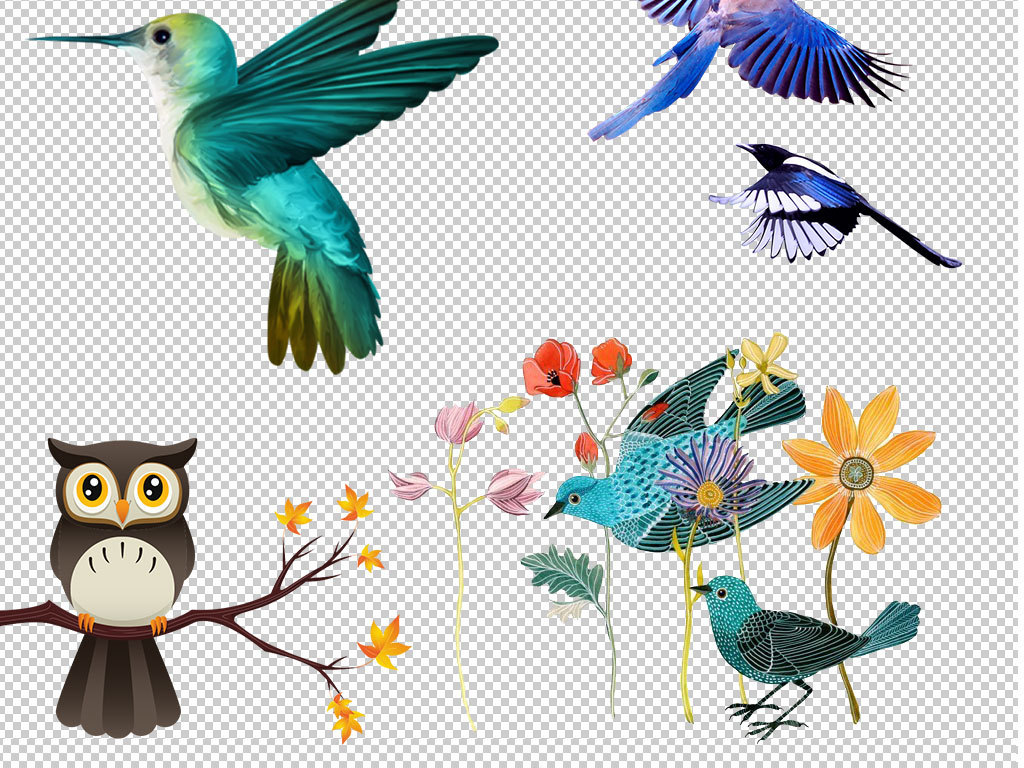 彩色鸟装饰画素材水彩花鸟花鸟手绘水彩手绘手绘鸟类图片鹦鹉图片鹦