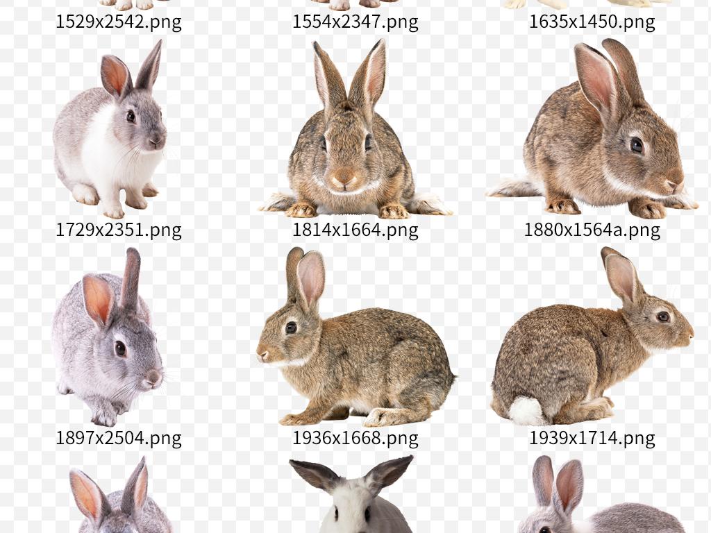 可爱卡通手绘兔子动物设计素材图片下载png素材-动物
