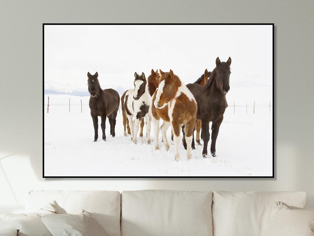 雪地奔跑骏马千里马动物摄影装饰画
