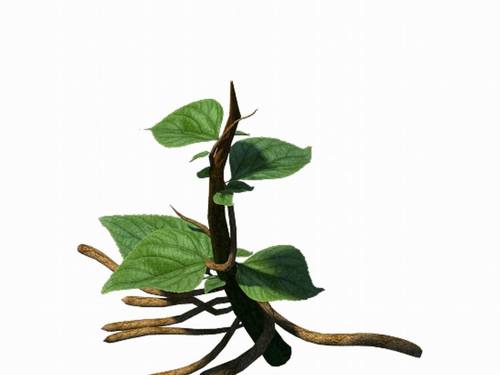植物大树-藤蔓01