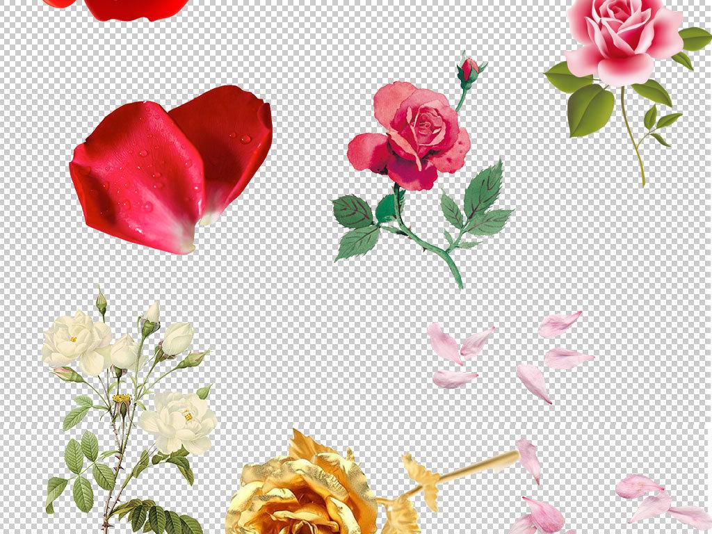 手绘水彩唯美花朵玫瑰花图片玫瑰花瓣玫瑰背景玫瑰花束红玫瑰白玫瑰
