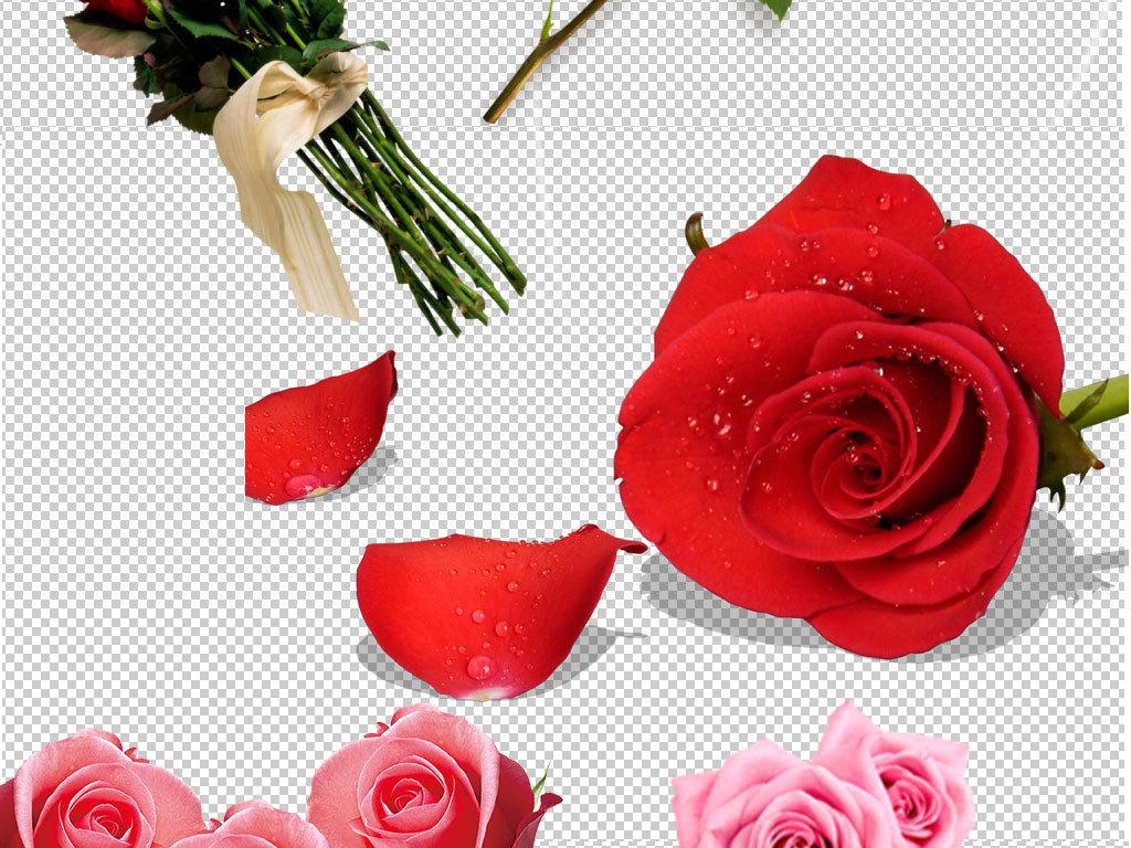 图片玫瑰花瓣玫瑰背景玫瑰花束红玫瑰白玫瑰玫瑰花纹