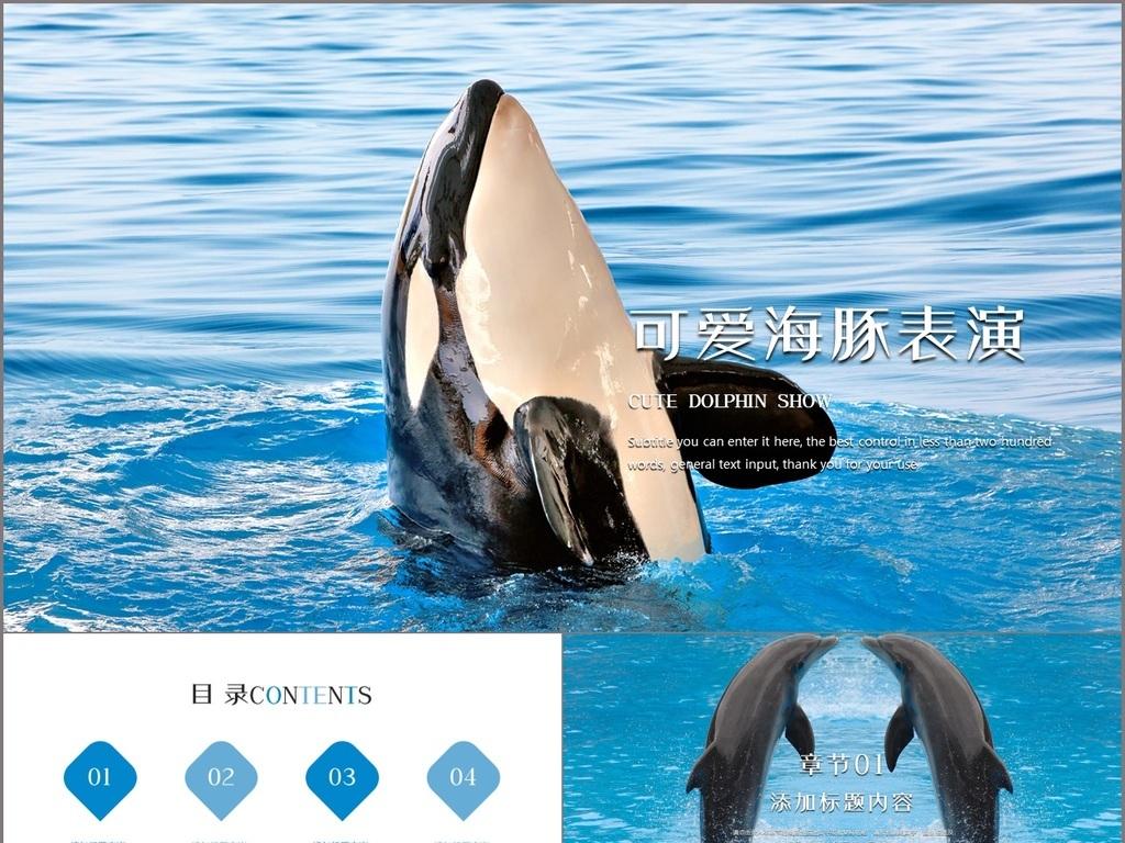 唯美可爱海豚表演海洋动物ppt模板