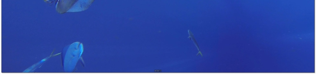 小鱼跃出水面
