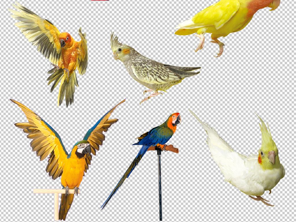 我图网提供精品流行各种动物鹦鹉免抠透明素材png下载,作品模板源文件可以编辑替换,设计作品简介: 各种动物鹦鹉免抠透明素材png 位图, RGB格式高清大图,使用软件为 Photoshop CS6(.png) 鹦鹉