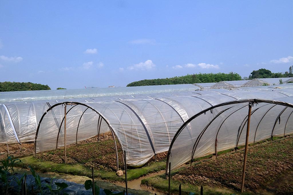 国内摄影图 风光风景 植物图片 > 蔬菜种植基地遮阳薄膜  版权图片
