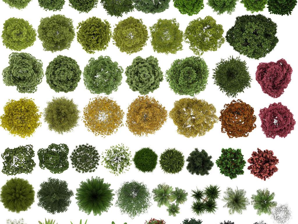 景观设计园林植物ps素材                                  素材手绘