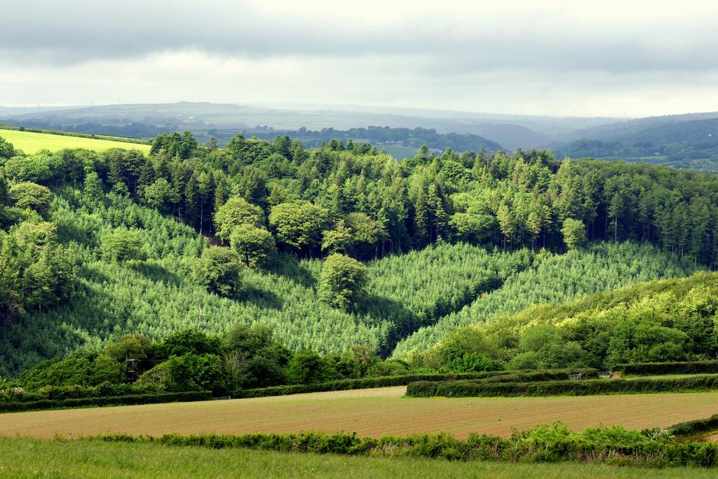 草地山坡森林树木4k风景素材(图片编号:16590831)__我