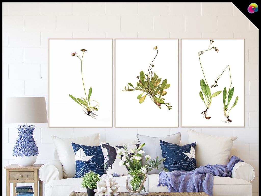 现代简约北欧小清新植物静物花卉标本无框画