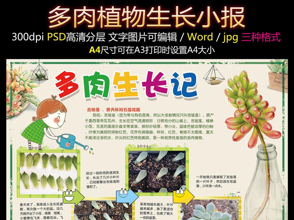 电子小报多肉植物生长小报