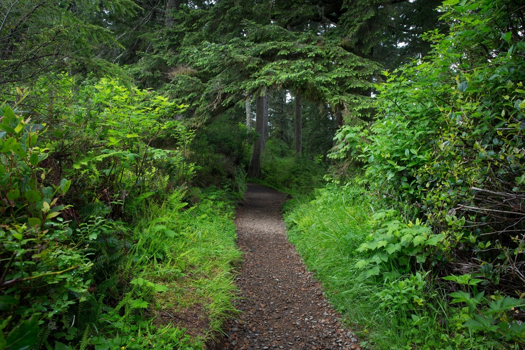 森林树木绿树叶4k风景图片