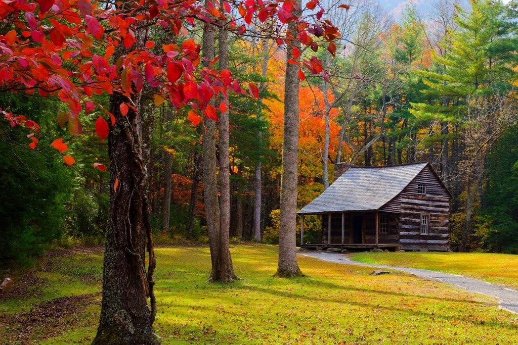 自然森林公园树秋天风景4k图片