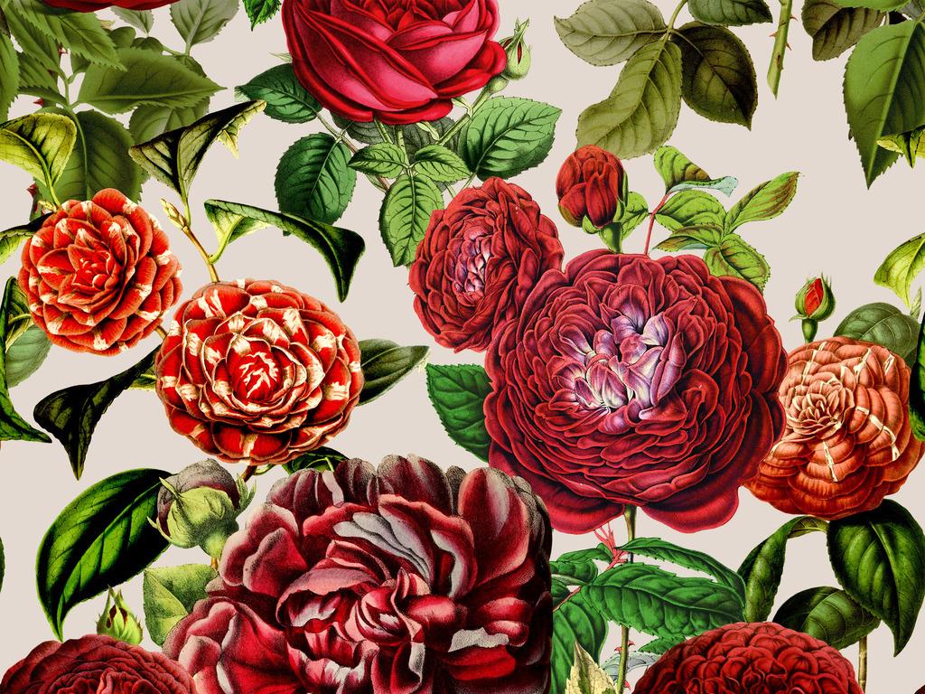 清新手绘玫瑰月季花卉