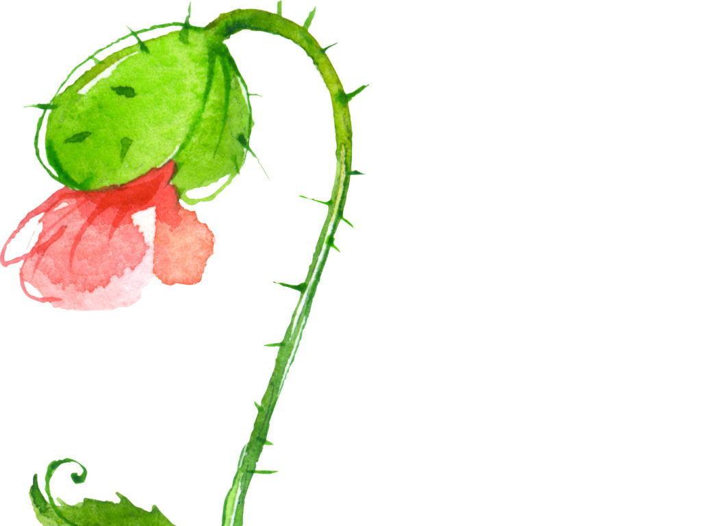 素材花卉手绘花卉花卉手绘手绘花形手绘花藤花手绘墙手绘蔷薇花手绘