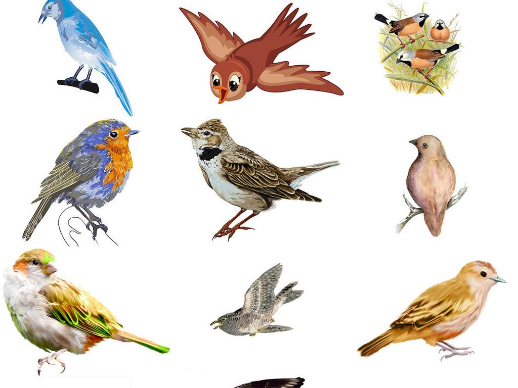 鸟类动物麻雀免抠png透明素材打包2