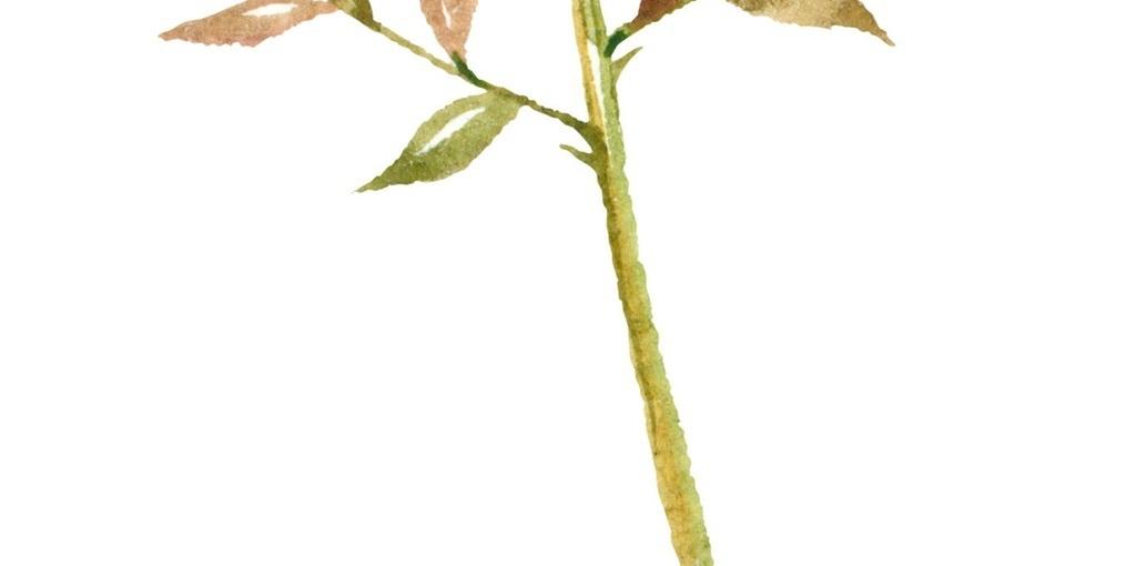 png手绘叶|单片叶子