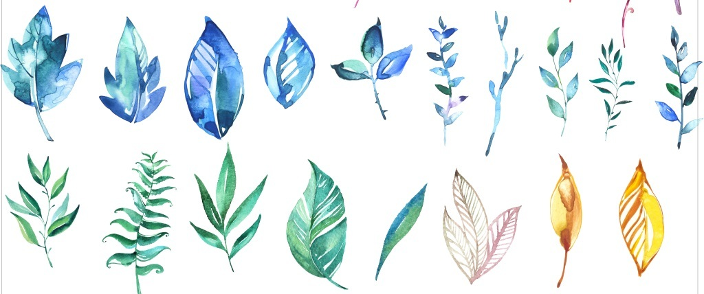 png手绘叶 单片叶子