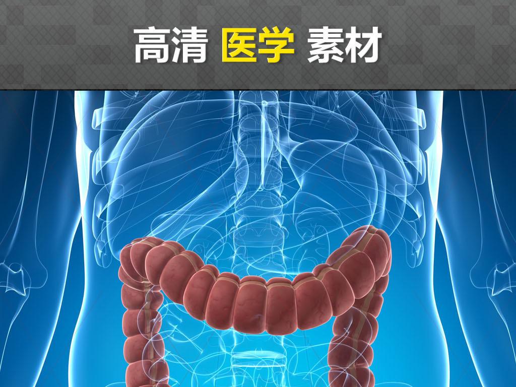 医科医学研究人体解剖肠道消化道肠胃结构图 位图, cmyk格式高清大图