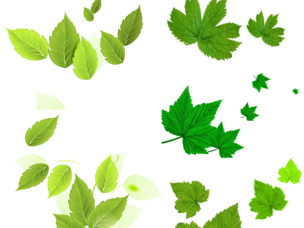 叶子一片树叶绿色素材树树叶素材绿叶树叶素材春季树叶绿叶夏季素材春