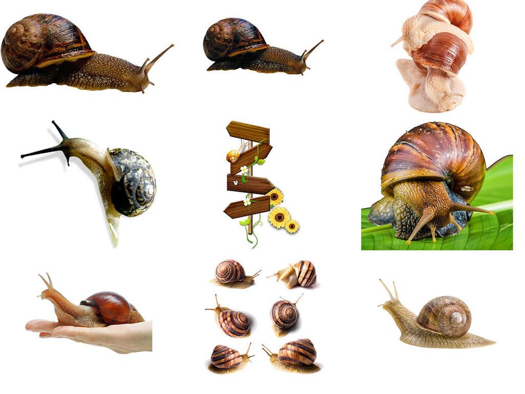 爬行动物蜗牛免抠png图片2
